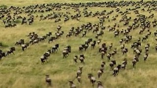 Watch Great Migrations Season 1 Episode 2 - The Need to Breed Online