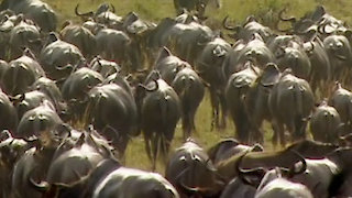 Watch Great Migrations Season 1 Episode 5 - Science of Great Mig... Online