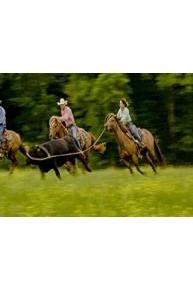 Ultimate Cowboy Showdown S1E3