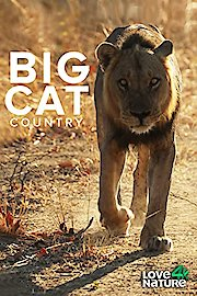Big Cat Country