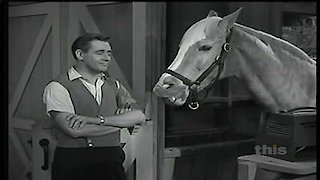 Mister Ed Season 2 Episode 24