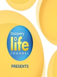 Watch Discovery Live - Start Streaming FREE Now!